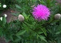 Долой морщины: рецепты красоты из лекарственных растений