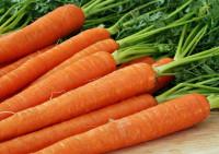 Натуральная косметика: морковь для красоты вашей кожи