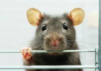 Ученые начали испытания нового средства для быстрого похудения