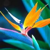 Растения, которые помогут улучшить цвет кожи