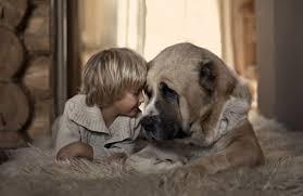 Дети, растущие с собаками, более здоровы