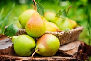 Исследование: всего одна груша в день помогает похудеть