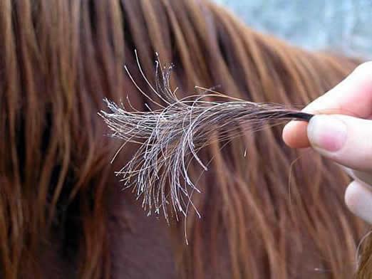 Простые шаги к восстановлению поврежденных волос