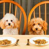 Выбор корма для собак мелких пород