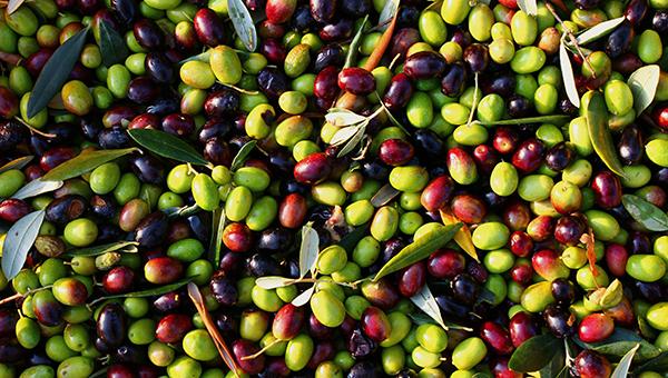Польза оливок для внешности и здоровья