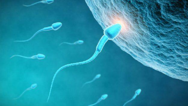 Донорская сперма обеспечивает появление на свет совершенно здоровых детей