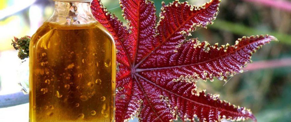 Касторовое масло: применение в косметике для здоровья волос и тела