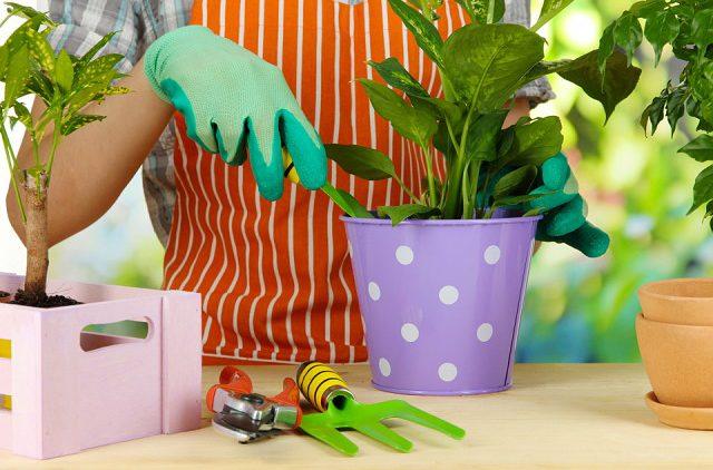 Комнатные растения. Ёмкости и субстраты: правильный подбор