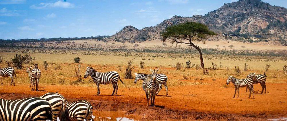 Туризм в Африке. Кения