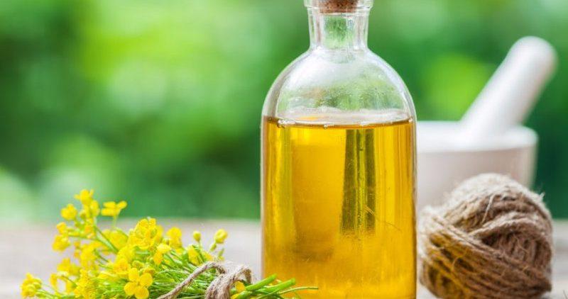 Чем полезно рапсовое масло?