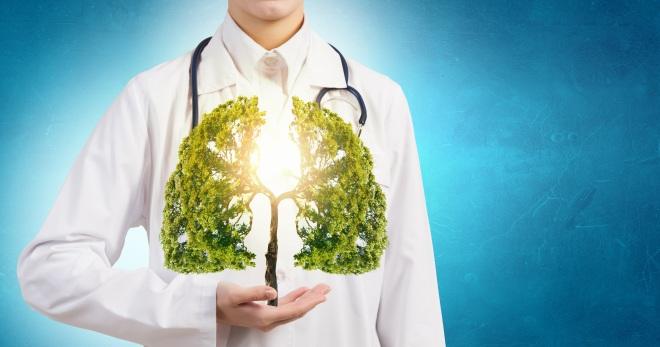 Легкие человека – как устроены и работают главные органы дыхательной системы?