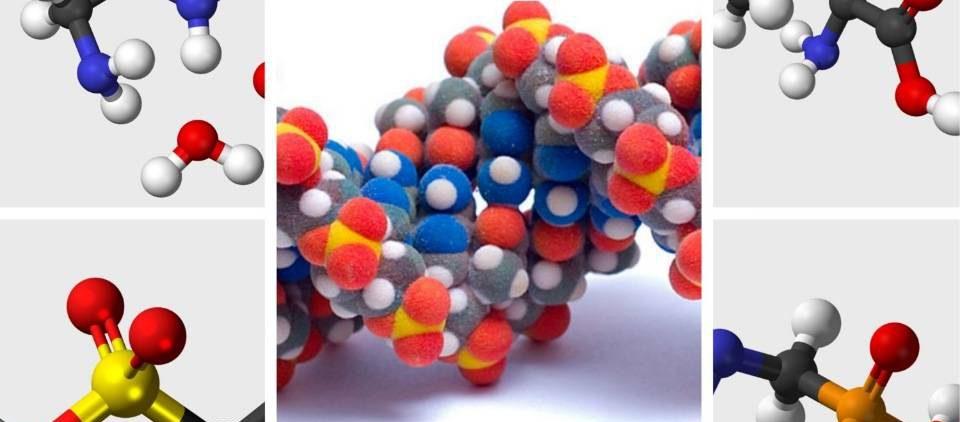 Последовательность аминокислот в белке