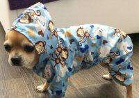 Товары для маленьких собачек в интернете магазине: что приобрести своему питомцу?