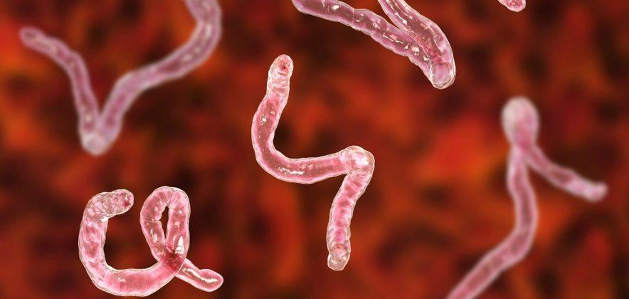 Могут ли кишечные паразиты замедлить процесс старения?