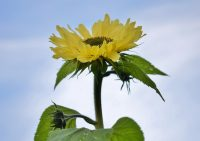 Витамин D: как форма выпуска влияет на эффект или… что нового этой весной?