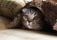 Кому отдать кота на время отпуска?